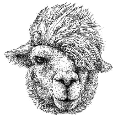 black and white engrave isolated Lama illustration