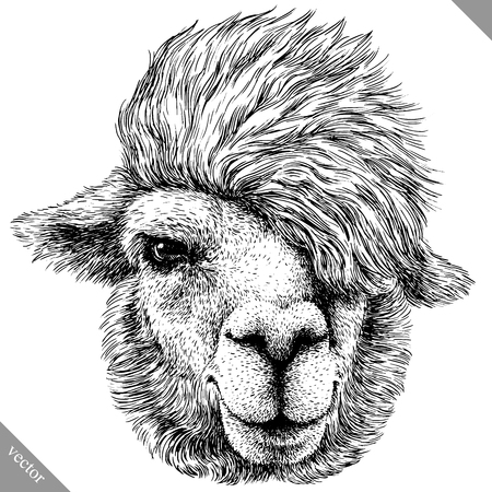 Black and white engrave isolated lama vector illustration.