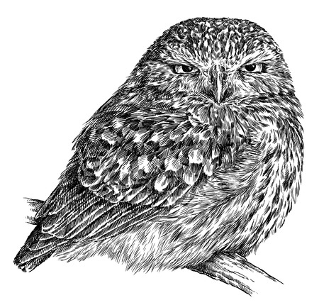 Schwarzweiss-Stich lokalisierte Eulenillustration Standard-Bild - 94262055