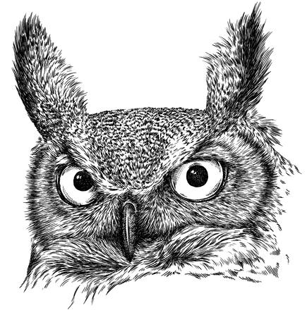 Schwarzweiss-Stich lokalisierte Eulenillustration Standard-Bild - 94261568
