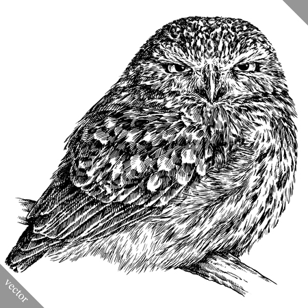 black and white engrave isolated owl vector art 向量圖像