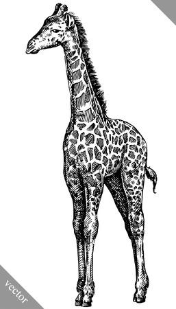 black and white engrave isolated giraffe vector art
