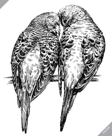 black and white engrave isolated parrot vector illustration Illustration