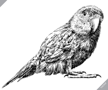 black and white engrave isolated parrot vector illustration Vectores