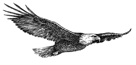 black and white engrave isolated eagle art
