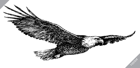 Black and white engrave isolated eagle vector art.