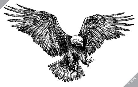 In bianco e nero incidere, illustrazione di arte di vettore dell'aquila isolata.