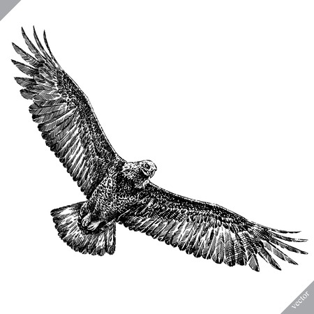 Black and white engrave isolated eagle vector art Illustration