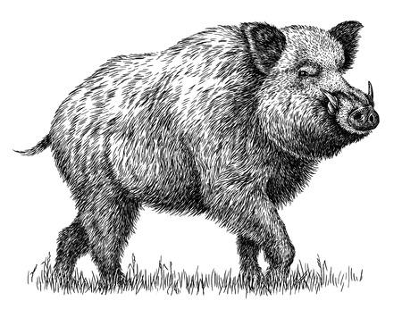Zwart en wit graveren geïsoleerde varken illustratie Stockfoto - 99944670