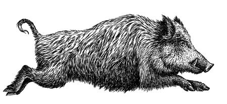 Zwart en wit graveren geïsoleerde varken illustratie Stockfoto