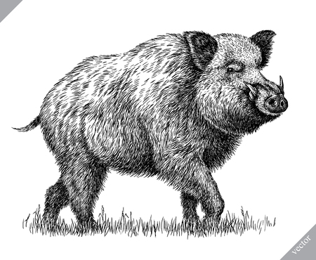black and white engrave isolated pig vector illustration Imagens