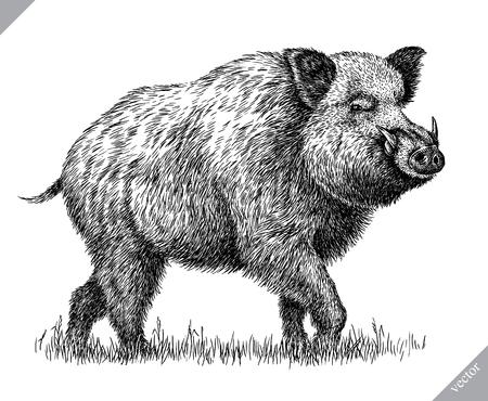 zwart en wit graveren geïsoleerde varken vectorillustratie Stockfoto