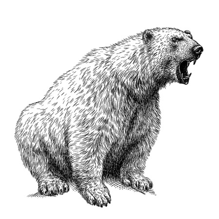black and white engrave isolated bear illustration Фото со стока