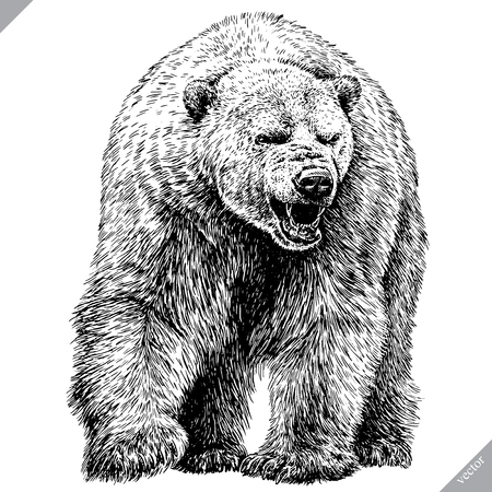 Black and white engrave isolated bear vector illustration