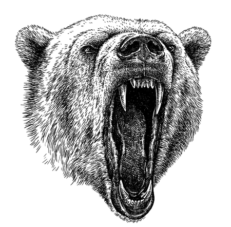 black and white engrave isolated bear illustration Imagens