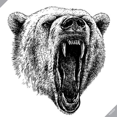 Ilustración de vector de oso aislado grabado en blanco y negro