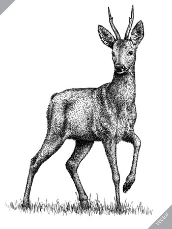 black and white engrave isolated deer vector illustration Ilustração
