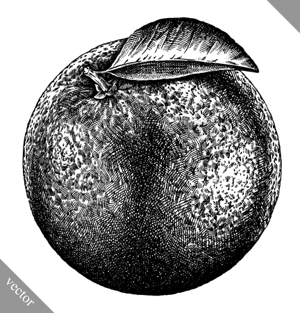 Engrave isolated orange hand drawn graphic vector illustration art