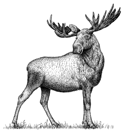black and white engrave isolated elk hand draw illustration