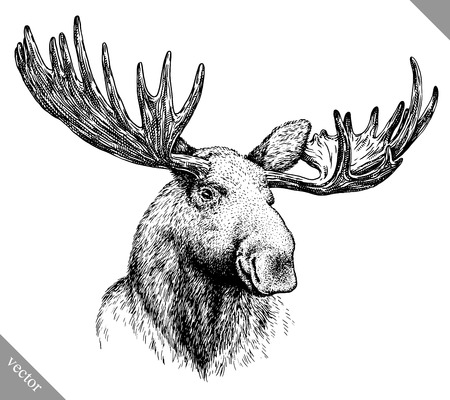 black and white engrave isolated elk hand draw vector illustration art Illustration