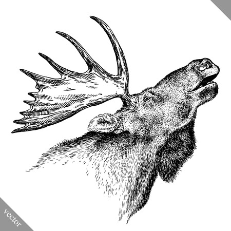 black and white engrave isolated elk hand draw vector illustration art Ilustração