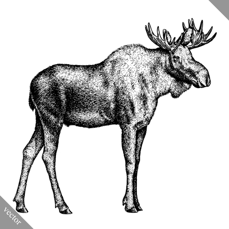 black and white engrave isolated elk hand draw vector illustration art Imagens - 115033557