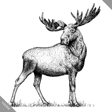 black and white engrave isolated elk hand draw vector illustration art  イラスト・ベクター素材