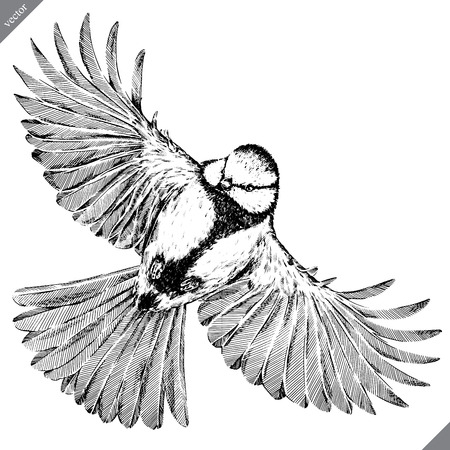 black and white engrave isolated tit vector illustration 版權商用圖片
