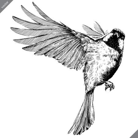 blanco y negro grabar aislado tit vector art
