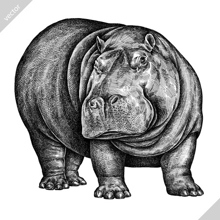 black and white engrave isolated hippo vector illustration art 向量圖像