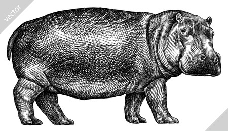 black and white engrave isolated hippo vector illustration Imagens - 122310595