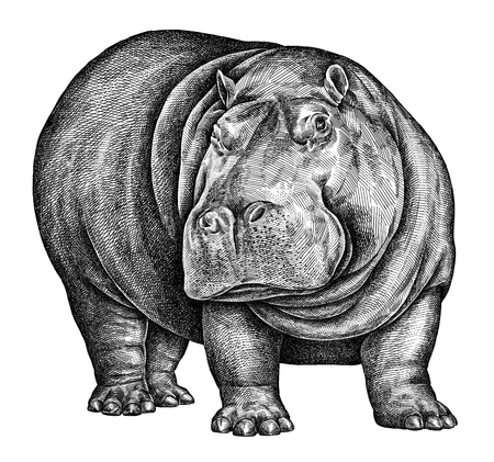 black and white engrave isolated hippo illustration
