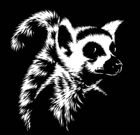 black and white linear paint draw lemur illustration art Stock fotó