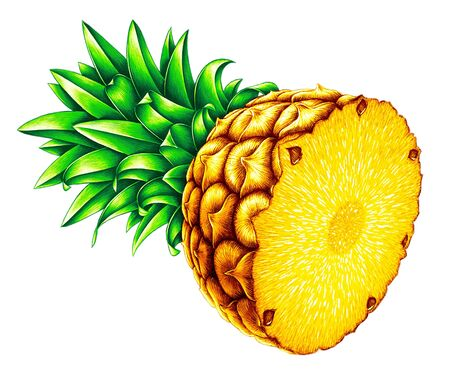 Highly detailed high quality realistic pineapple illustration