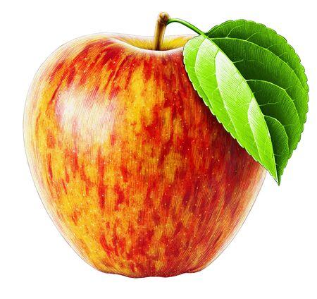 Highly detailed high quality realistic Apple illustration Reklamní fotografie