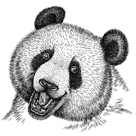 black and white engrave isolated panda illustration Banco de Imagens