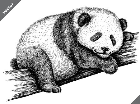 black and white engrave isolated panda vector illustration 向量圖像