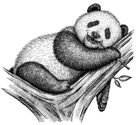 Black and white engrave isolated panda