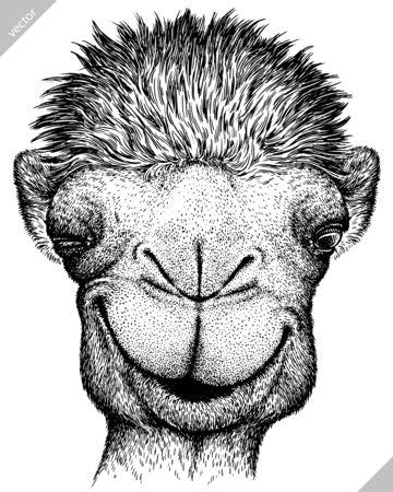 black and white engrave isolated camel illustration Banco de Imagens