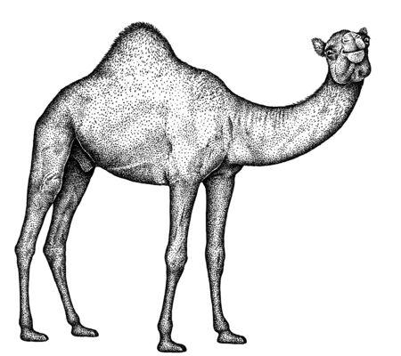 noir et blanc graver l'art du chameau isolé Banque d'images