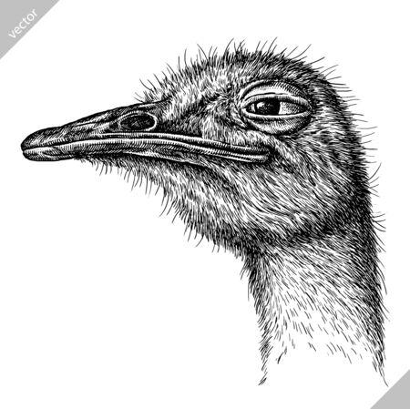 black and white engrave isolated ostrich vector art Ilustração