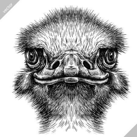 blanco y negro, grabado, aislado, avestruz, vector, arte