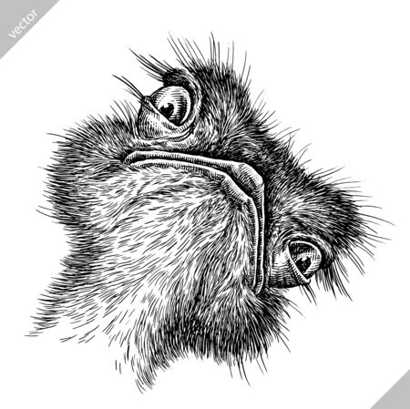 black and white engrave isolated ostrich vector art Banco de Imagens