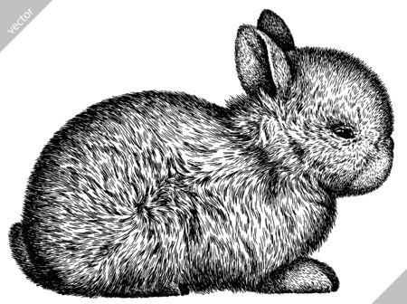 noir et blanc graver illustration vectorielle de lapin isolé Vecteurs