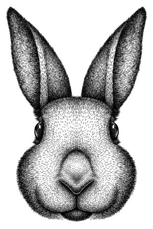 black and white engrave isolated rabbit illustration