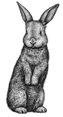 black and white engrave isolated rabbit art Banco de Imagens
