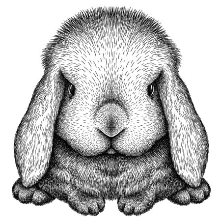 black and white engrave isolated rabbit art 版權商用圖片