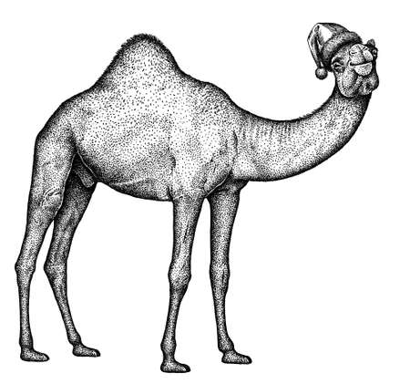 black and white engrave isolated camel illustration 版權商用圖片