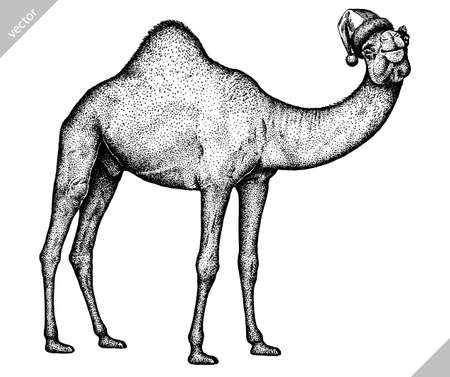 black and white engrave isolated camel vector illustration 向量圖像