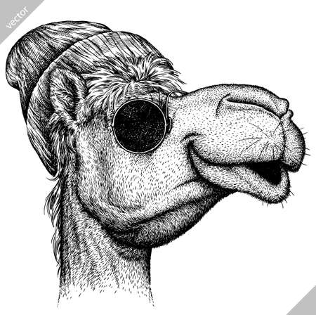 black and white engrave isolated camel vector illustration Illustration